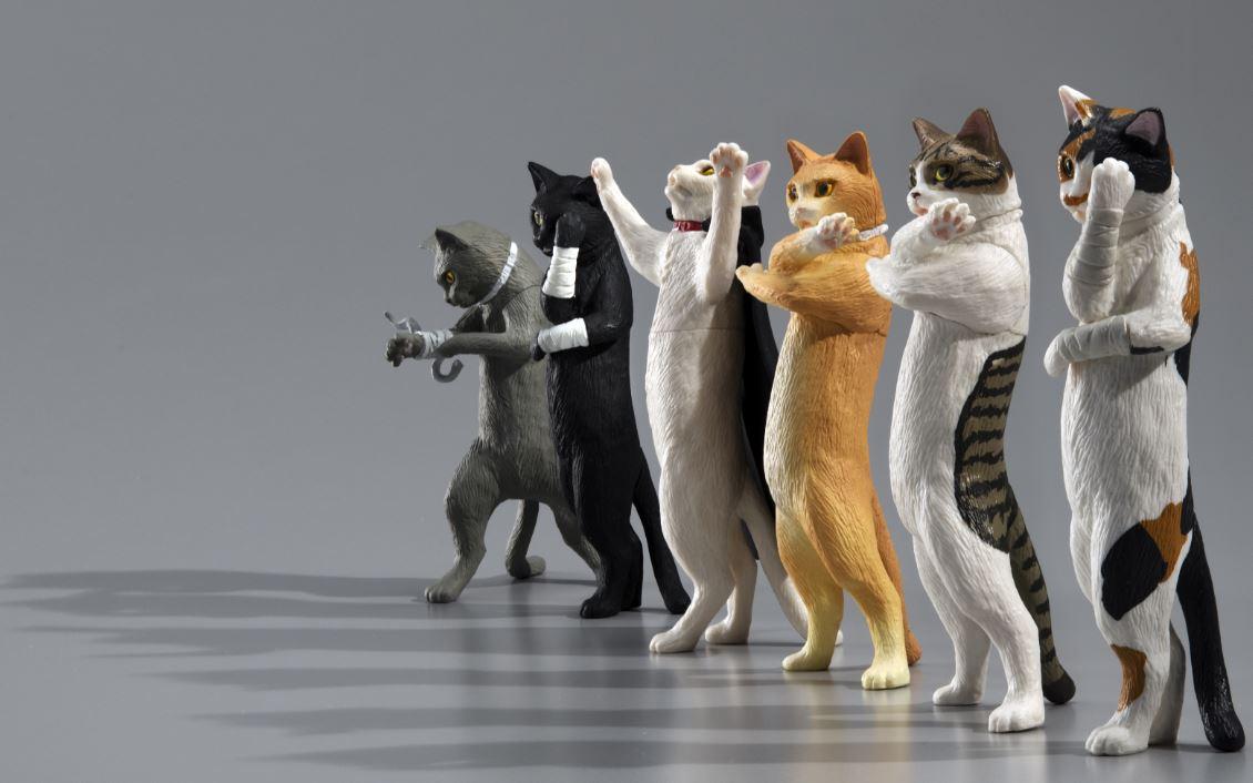 愛と青春の暗黒妄想猫集団